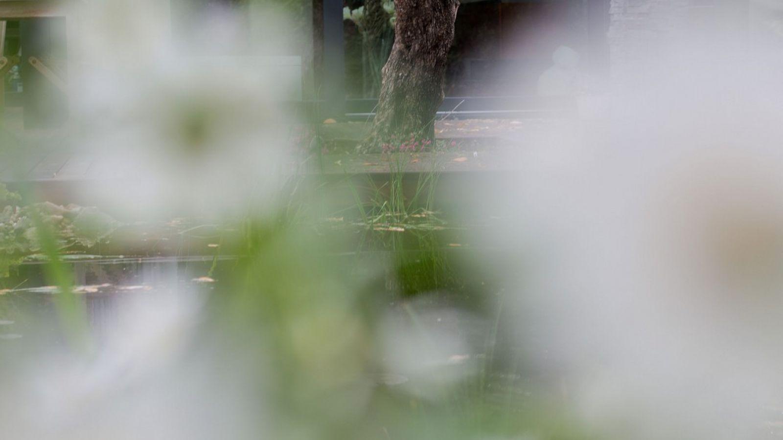 2.6 Holz und Wasser spielen die Hauptrolle im Naturgarten in Düsseldorf