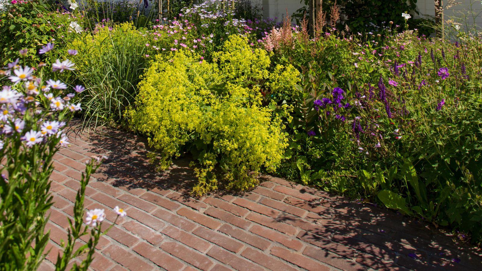 2.5 Überwältigende Blütenpracht und üppiges Grün - Naturoase in Ratingen